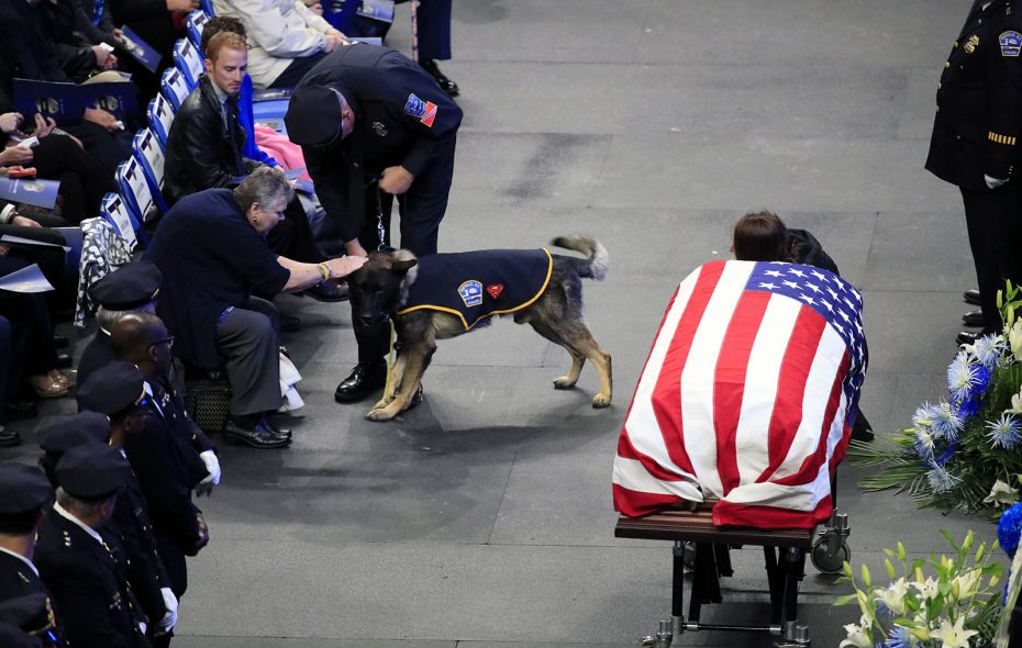 Shield attended the funeral for Buffalo Police Officer Craig E. Lehner, his handler, on Oct. 25 at KeyBank Center. (Harry Scull Jr./News file photo)