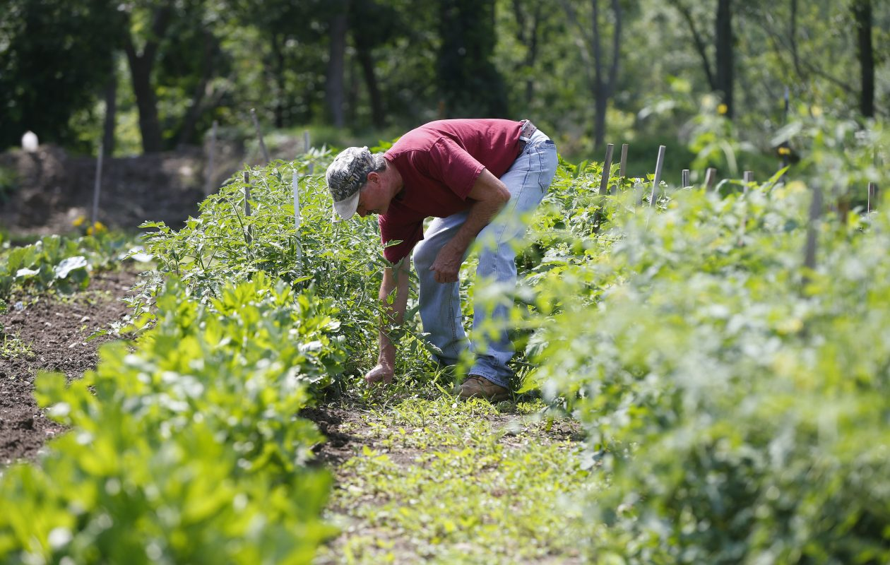 """Now, I'm living my faith,"" says Maury Buffum, who broke free from drug and alcohol addiction during an intensive nine-month program at the Total Freedom Farm in Darien Center, and can often be found during better weather in the garden there. (Mark Mulville/Buffalo News)"