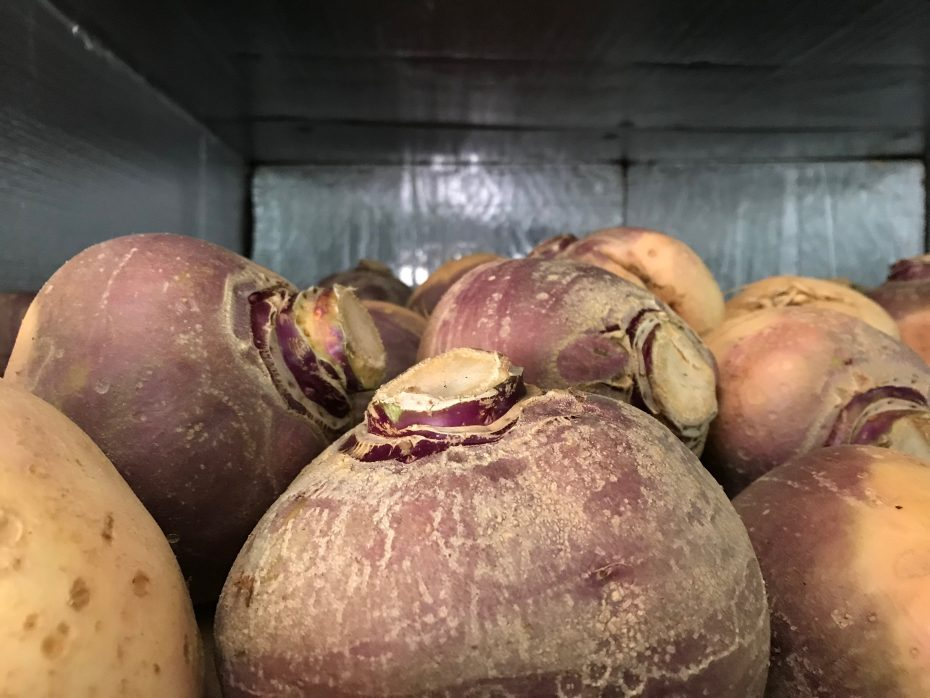 rutabagas in cold storage
