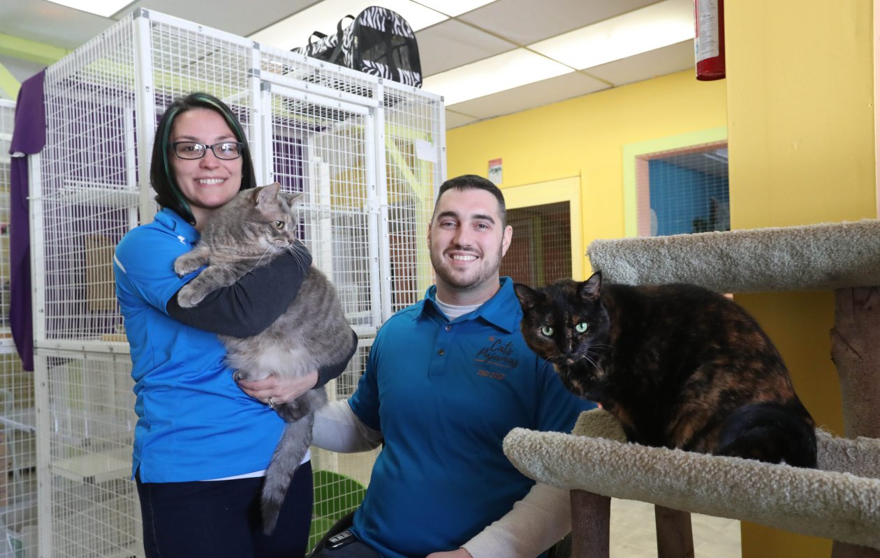 Sarah and Josh Brunner run Cat's Pajamas Feline Hotel in Hamburg. They have been operating the business since they bought it in May.  (Sharon Cantillon/Buffalo News)