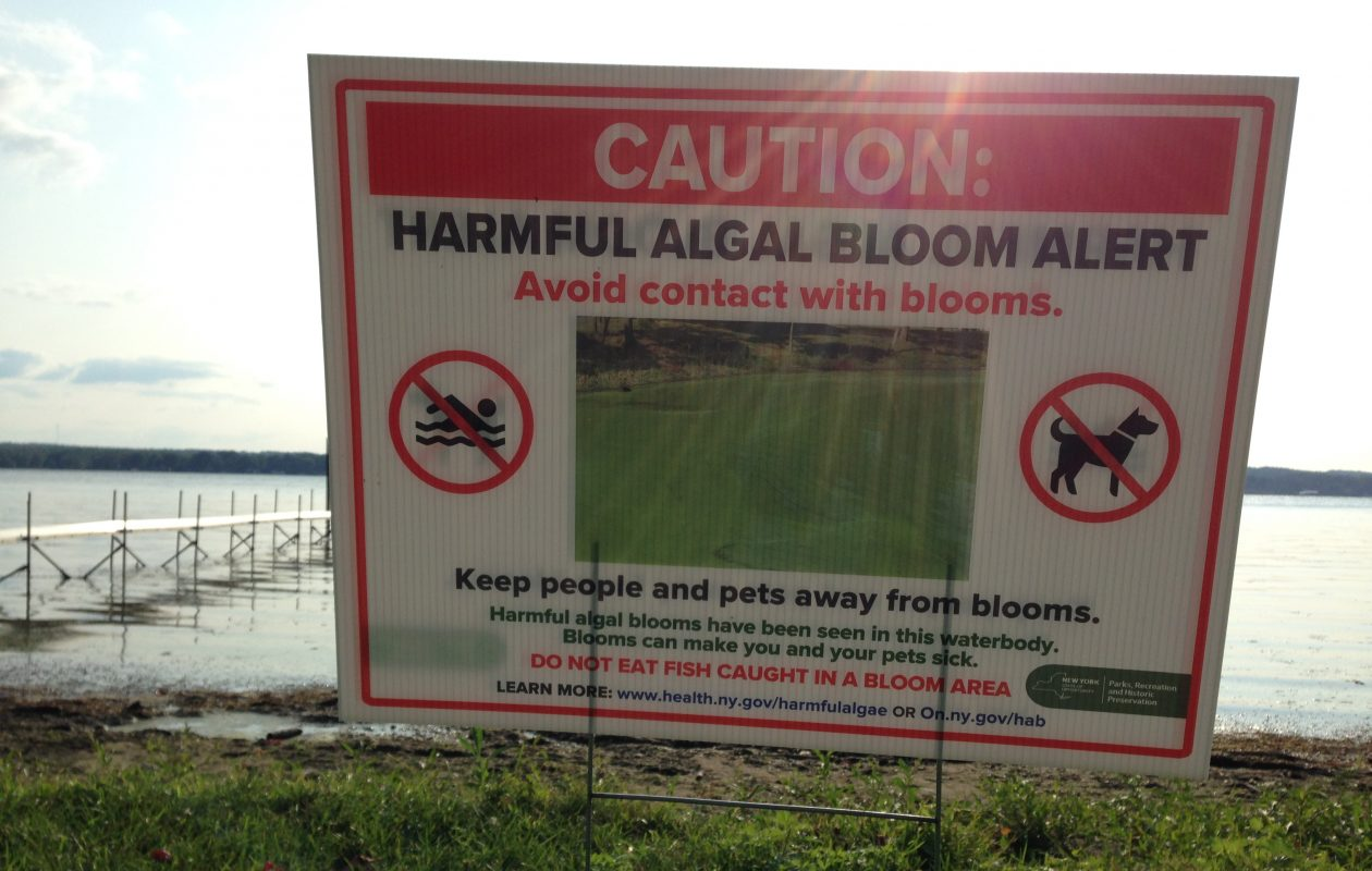 Toxic algal blooms have proliferated on inland upstate lakes like Chautauqua Lake every summer. (T.J. Pignataro/Buffalo News)