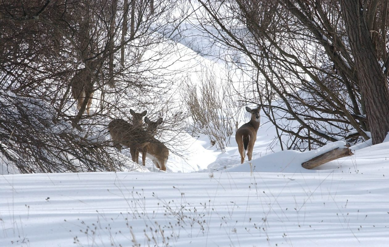 Jay Burney, chairman of the Friends of Times Beach Nature Preserve, says there is plenty of forage for deer to eat. He urges people not to feed them. (News file photo)