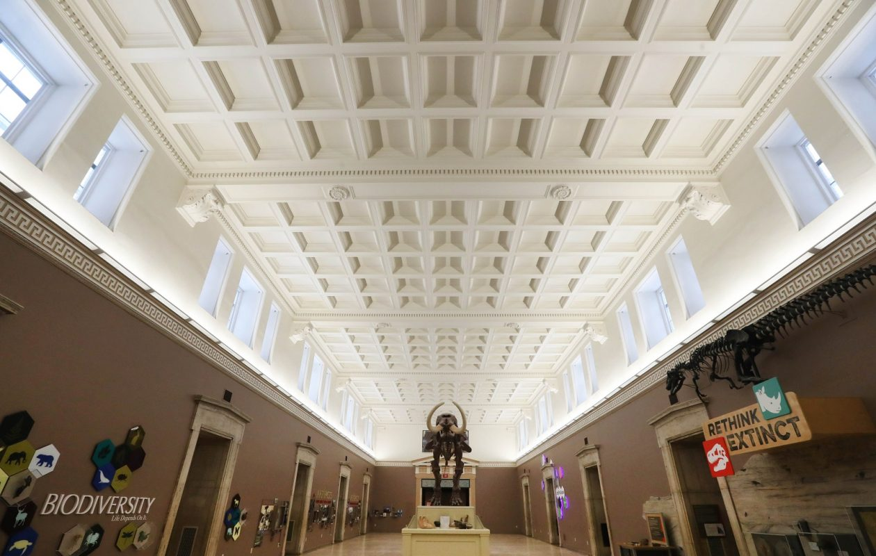 Hamlin Hall, on the second floor, is the magnificent central room of the museum. (Sharon Cantillon/Buffalo News)