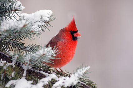 Birds can find refuge in the trees and shrubs in your yard,  including your discarded Christmas tree. Read on for some tips.
