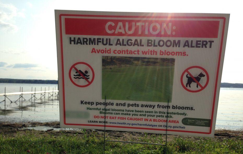 Toxic algae blooms on Chautauqua Lake are an annual problem during the summer months. (T.J. Pignataro/Buffalo News)