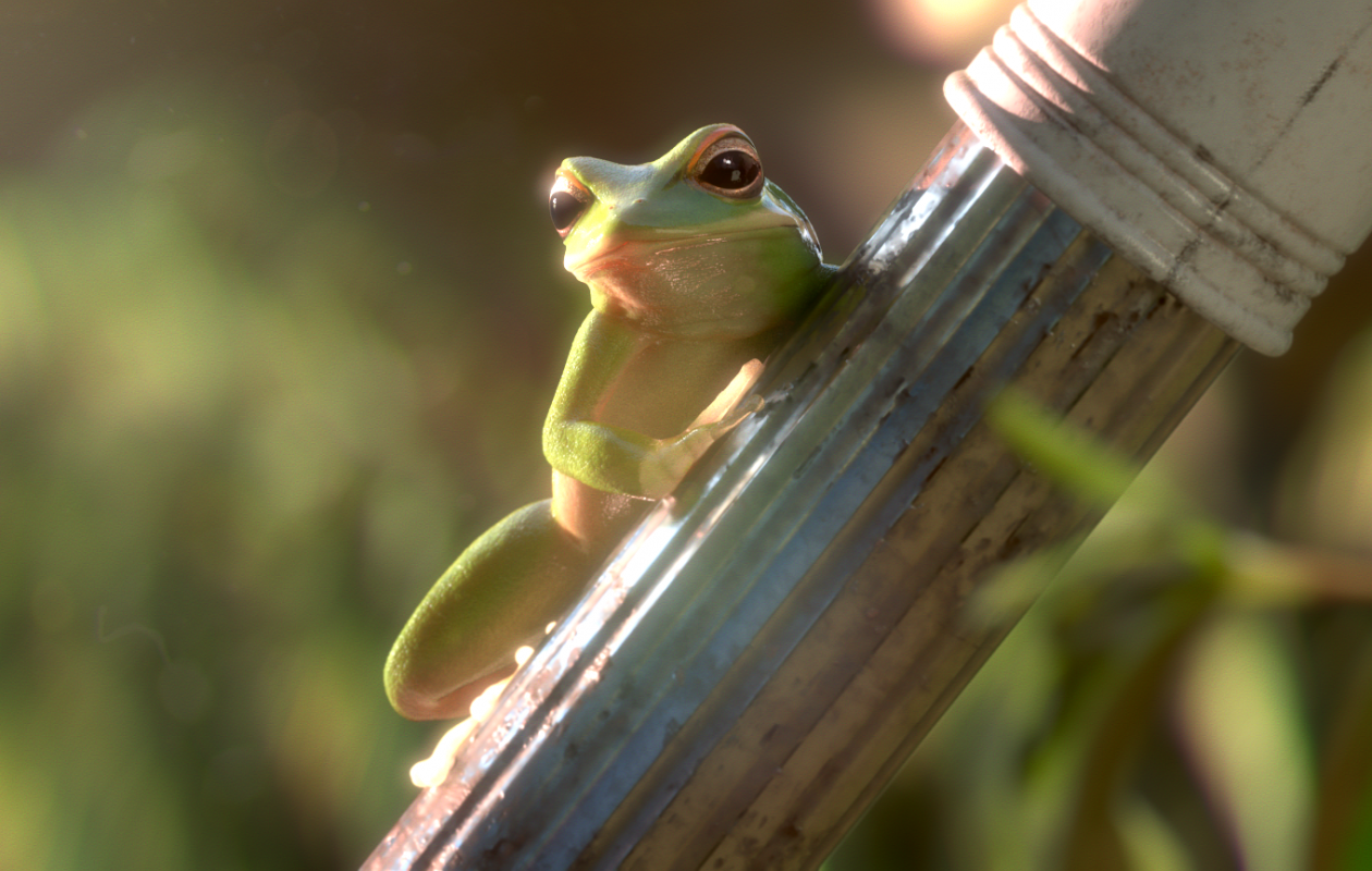 Mischievous amphibians have fun in 'Garden Party,' one of the 'Oscar Nominated Shorts' playing at the Dipson Eastern Hills Mall.