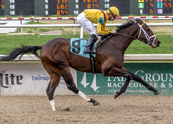 Telekinesis, a Ghostzapper colt, is the 2018 Queen's Plate Winterbook favorite. Photo Credit: Hodges Photography