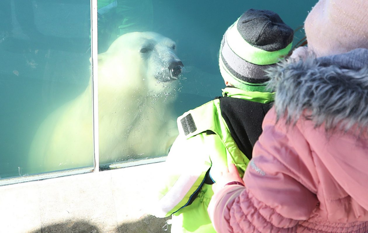 Luna, the Buffalo Zoo's female polar bear, swims by for a visit, but is sneaky and comes in low and pops right up in front of Ethan Blackwell, 2, and his sister Abigale, 5. (Sharon Cantillon/Buffalo News)