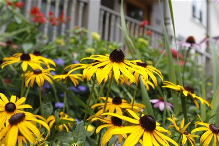 Sick of winter? Escape to some WNY gardens