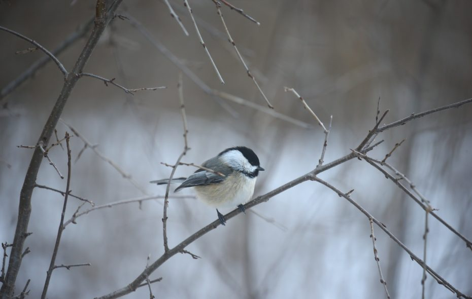 Birds and other animal species need help from humans. Our yards must become the habitat and support eco-systems, writes Sally Cunningham.  (John Hickey/News file photo)