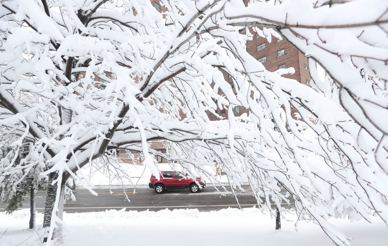 People woke up to trees covered in heavy snow  March 2. (Sharon Cantillon/News file photo)