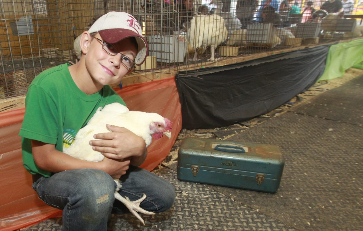 Jacob Rauker of North Collins with his Cornish Rock Chicken that took second place at the Erie County Fair in 2012. (John Hickey/News file photo)