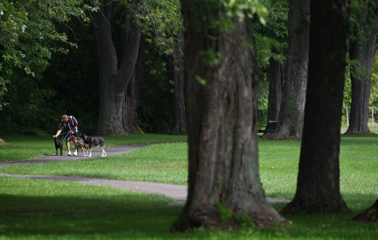 A person walks some dogs through Jayne Park on Cayuga Island in Niagara Falls Tuesday, August 25, 2015.     (Mark Mulville/Buffalo News)
