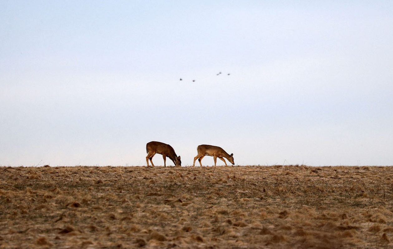 Deer and people alike may have to deal with temperatures cooler than average for a little while longer. (Mark Mulville/News file photo)