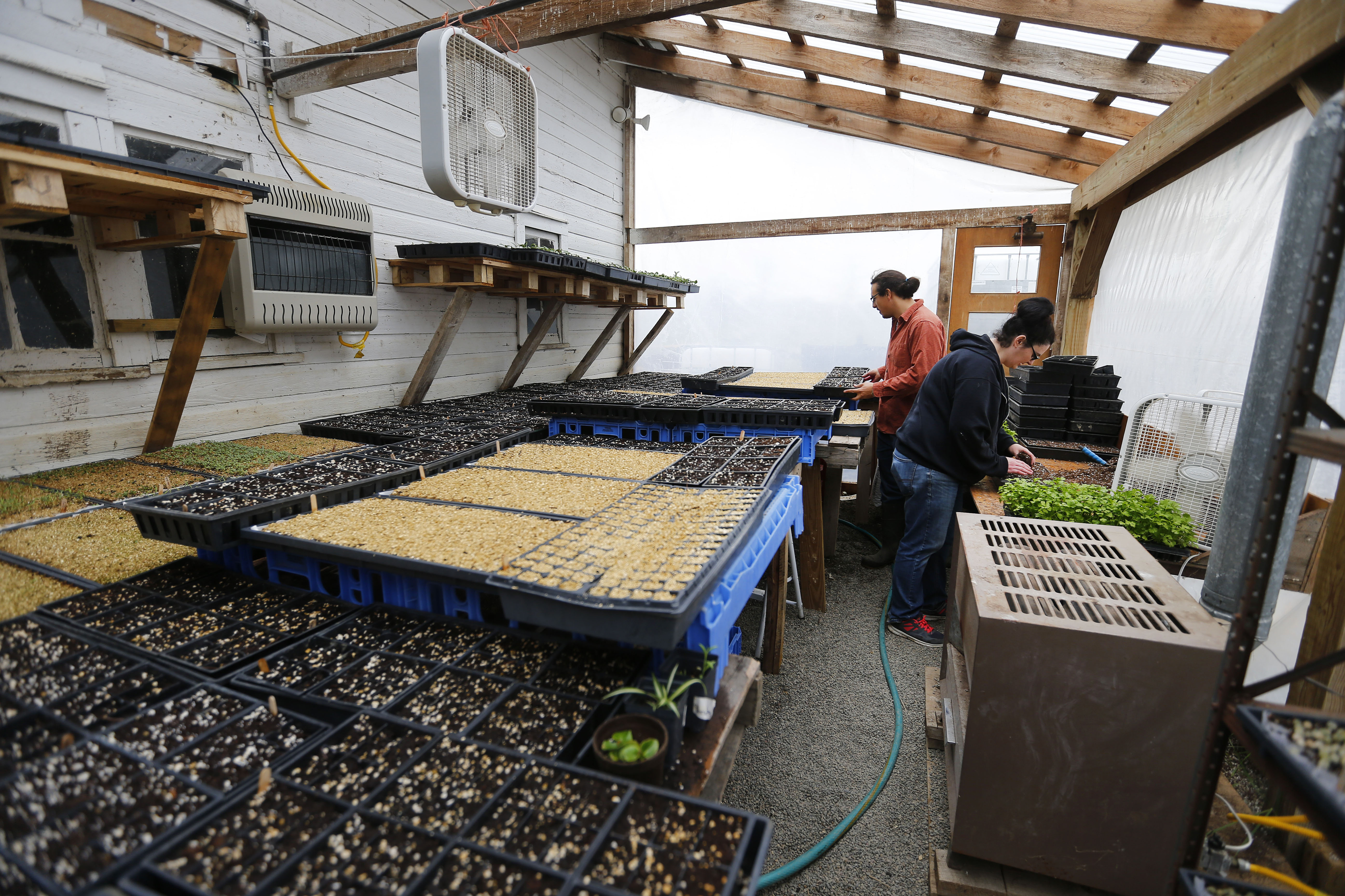 Hemp taking root as farmers embrace 'Mother Nature's perfect