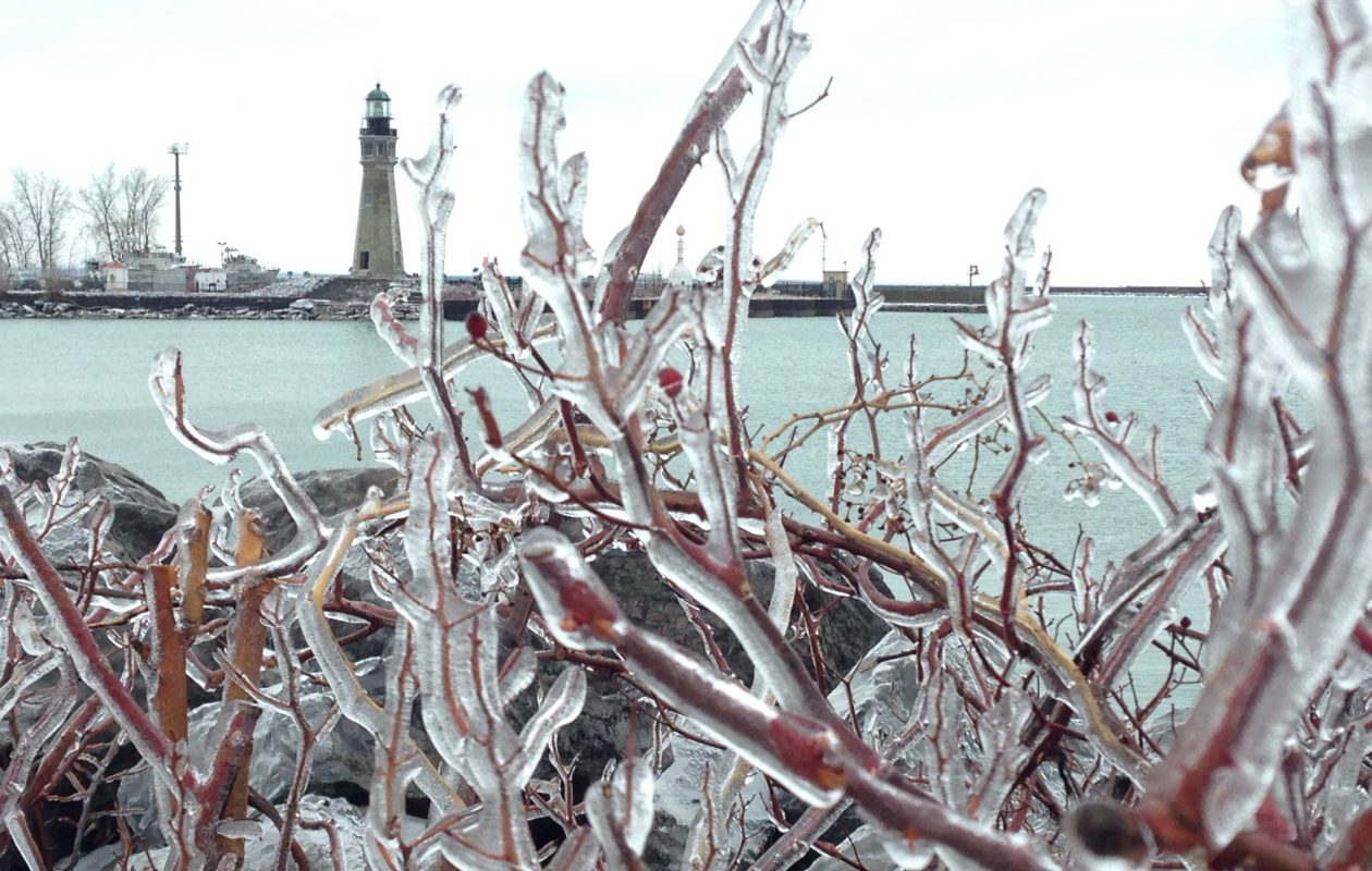 Ice encrusted vegetation at Erie Basin Marina. (T.J. Pignataro/Buffalo News)