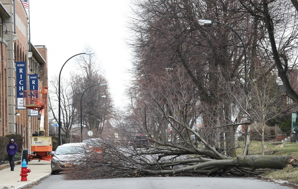 A fallen tree blocked Mercer Avenue across from All High Stadium in Buffalo on Wednesday. (Sharon Cantillon/Buffalo News)