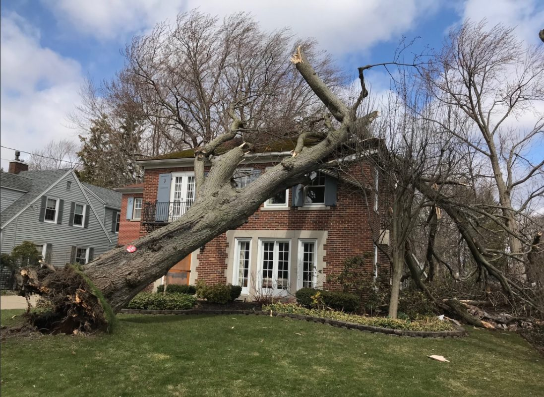 The wind toppled a tree into a house in Hamburg on Wednesday. (Mark Mulville/Buffalo News)
