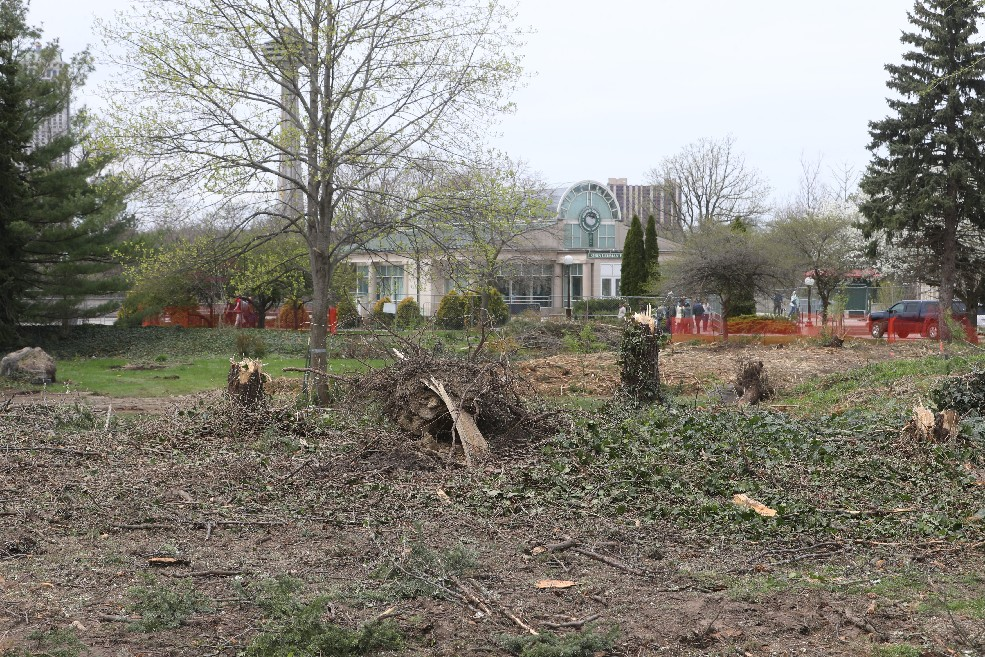 The site of the removal of 73 trees in Niagara Falls State Park on May 11, 2018. (John Hickey/Buffalo News)