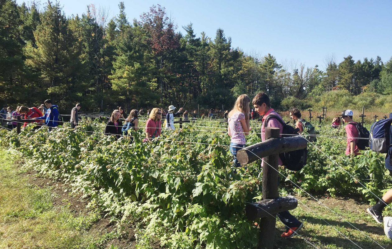 Pick strawberries from the vine at Luna Farms in Newfane, (Luna Farms)