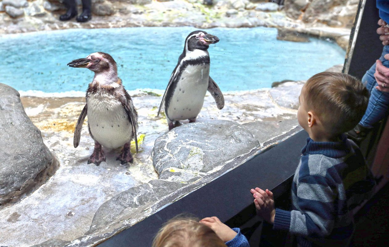 Spend an afternoon up close with penguins at the Aquarium of Niagara. (Sharon Cantillon)
