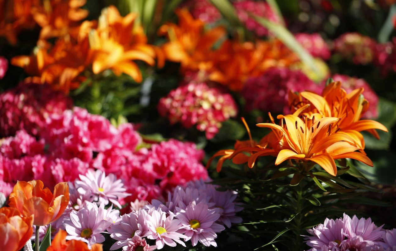 Annuals, perennials, herbs, vegetable plants and more will be sold Friday and Saturday during the annual Cornell Cooperative Extension of Erie County Master Gardener Program Plant Sale at First Presbyterian Church of Buffalo, One Symphony Circle..   (Mark Mulville/News file photo)