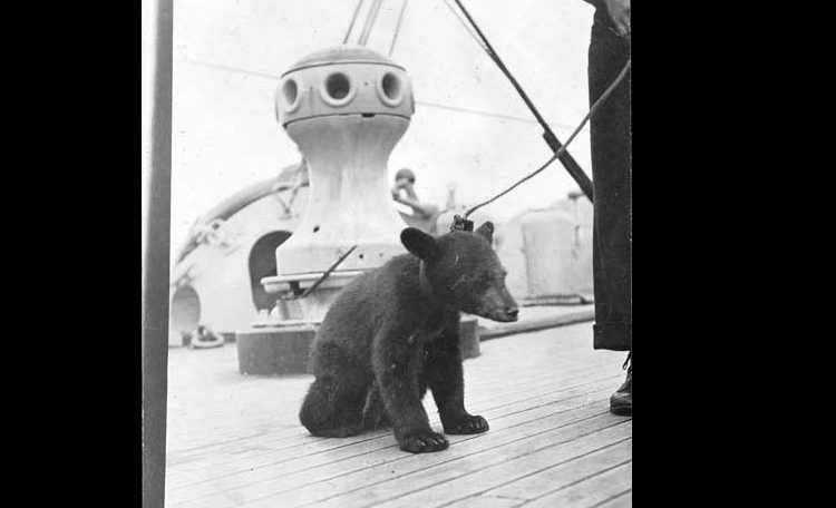 Teddy, a ship's mascot, on the USS Buffalo during the 1914 Alaskan Radio Expedition. (Photo courtesy U.S. Naval History and Heritage Command)