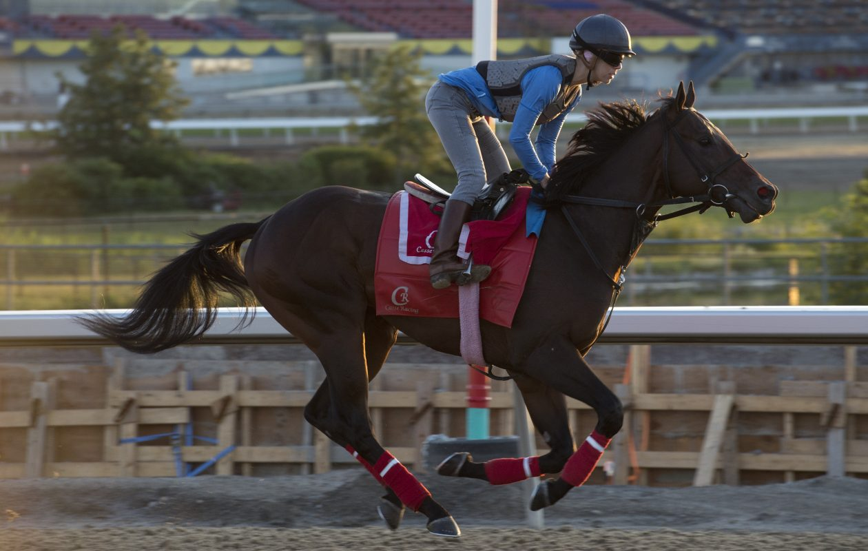 Queen's Plate contender Telekinesis with exercise rider Cassie Garcia aboard is the 5-2 favorite for the Queen's Plate.  Photo Credit: Woodbine/ michael burns photo