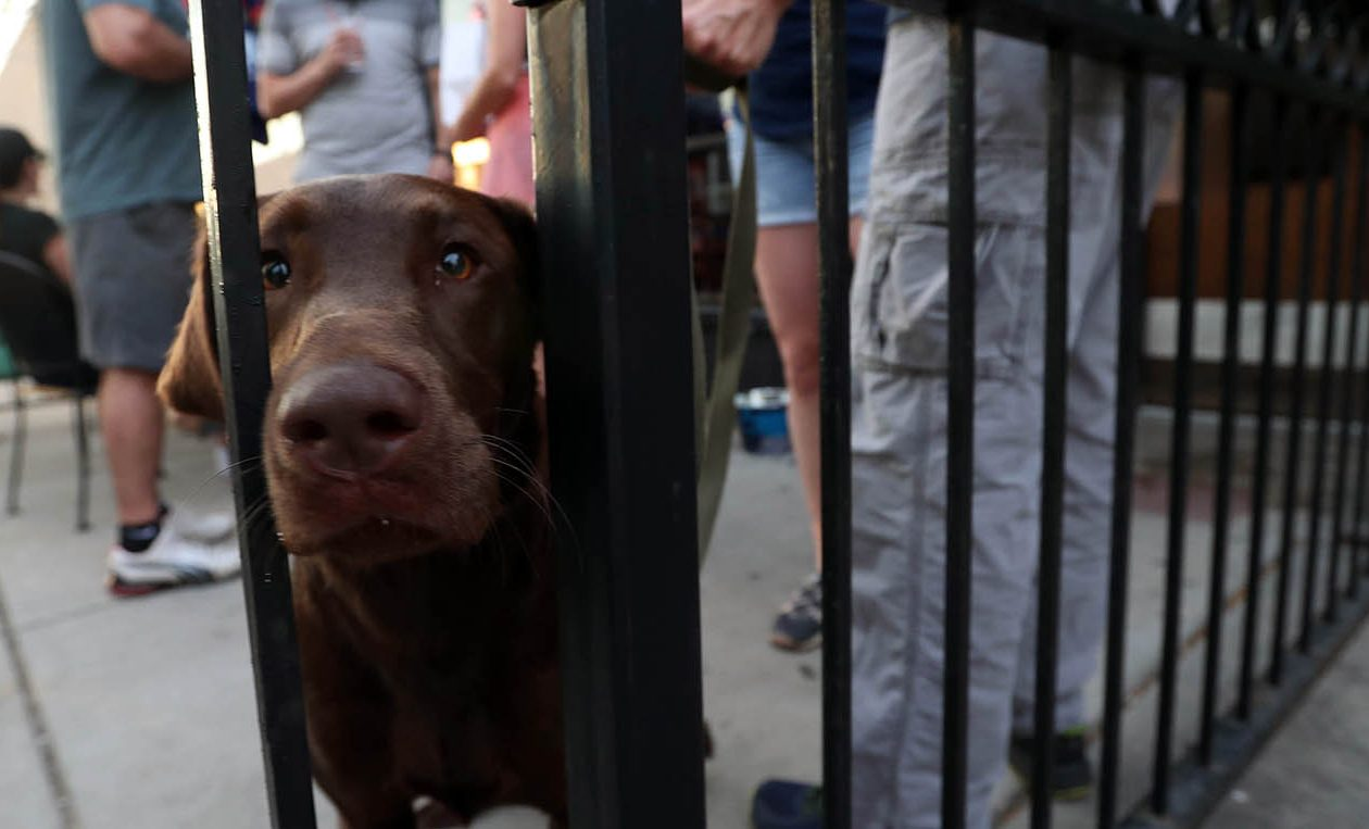Buffalo's law department, animal shelter and police and the Erie County District Attorney's Office will work with SPCA Serving Erie County on a local law placing restrictions for owners leaving their pet dogs tethered outside to stationary objects like fences for long periods of time in extreme hot or cold weather. (Sharon Cantillon/News file photo)