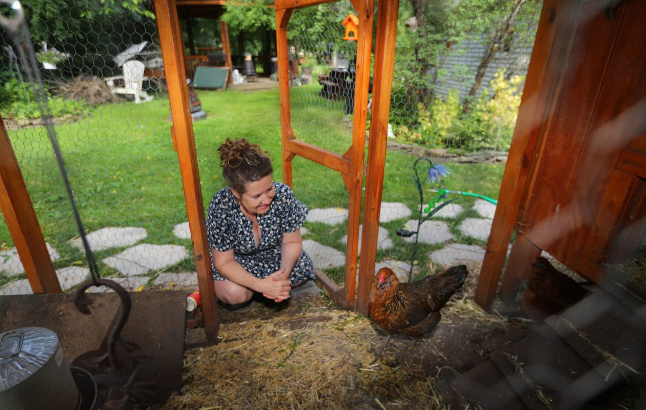 Kimberly Fedkiw with her chickens in the coop in her Eggertsville yard. Williamsville recently joined Amherst in granting permission for homeowners to raise chickens. (John Hickey/Buffalo News)