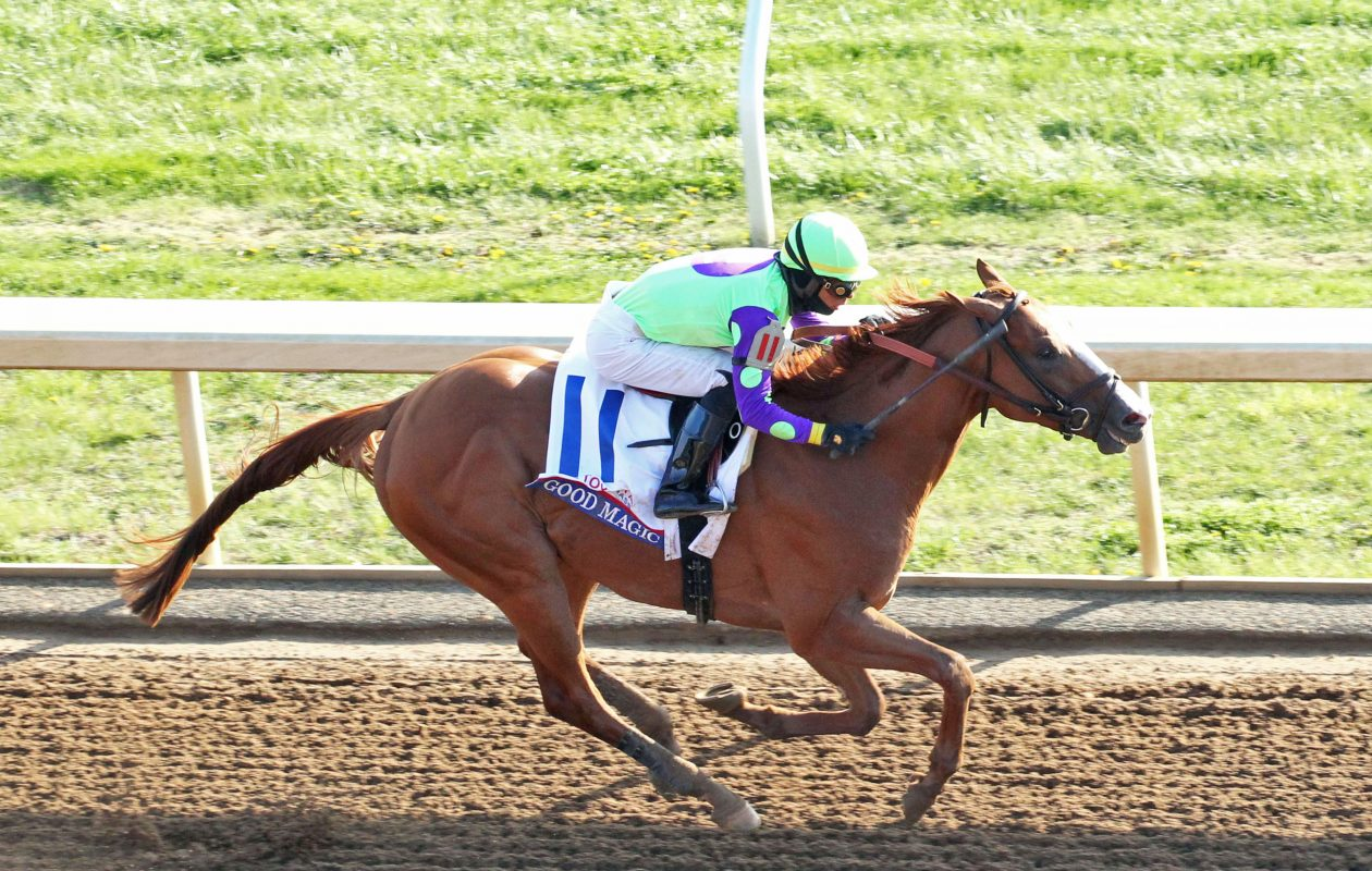 Good Magic will be looking for his first win since the G2 Toyota Blue Grass in April in Sunday's Haskell. Photo Credit; Coady Photography