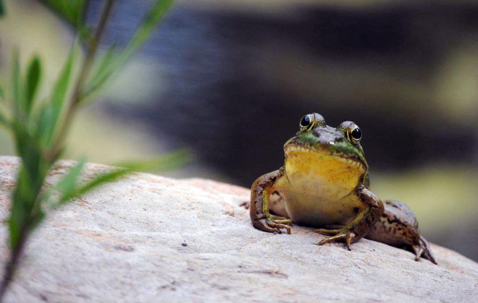 "Volunteer ""citizen scientists"" help monitor the populations of native species at Reinstein Woods. (Reinstein Woods)"