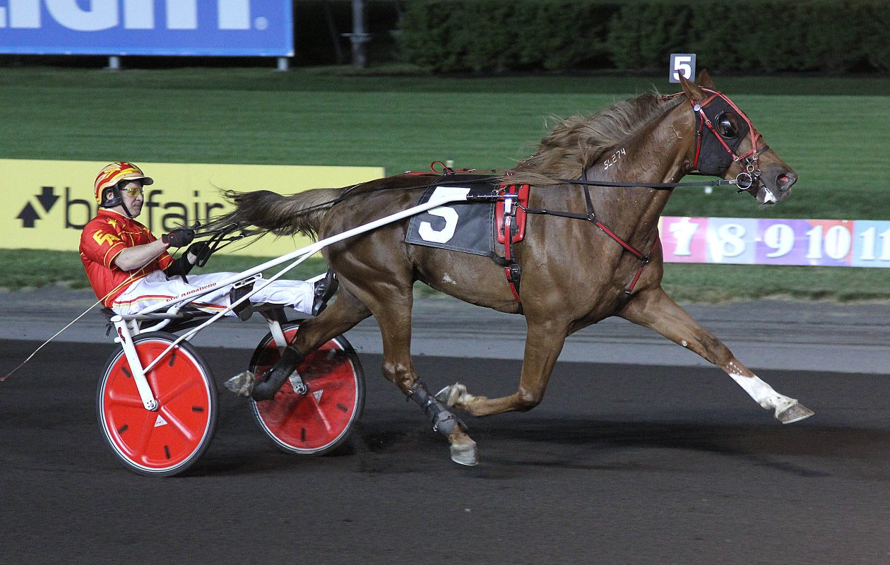 Harness horse Shady McCoy on the track at the Meadowlands (Michael Lisa/Meadowands)