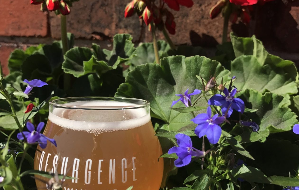 The Hibiscus Saison from Resurgence Brewing is made with hibiscus powder. (via Resurgence)