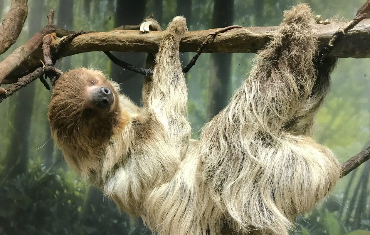 Ethel, the Buffalo Zoo's 31-year-old two-toed sloth, died Tuesday. She was a visitor and keeper favorite, a zoo spokesman said.