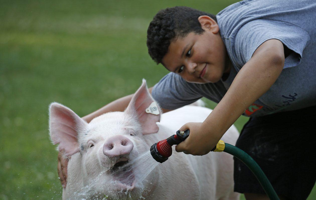 Trevor Beats, 11, of Marilla, offers Gordy a drink from a garden hose during a heat wave earlier this summer.  (Robert Kirkham/Buffalo News)