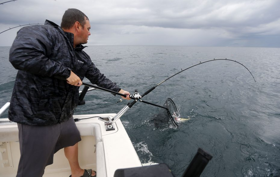 Captain Ron Duliba nets a walleye on his boat on Lake Erie near Dunkirk on Aug. 8. (Mark Mulville/Buffalo News)