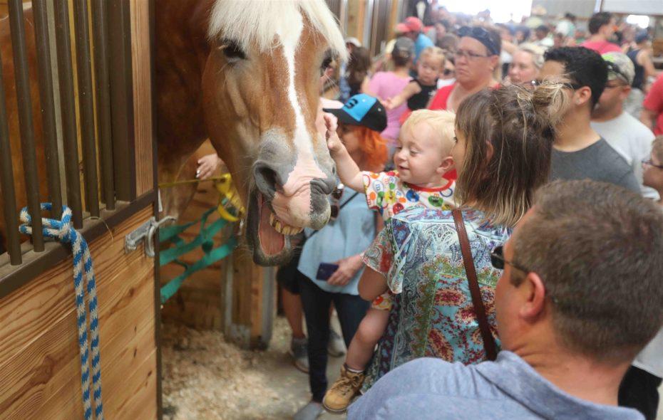 Sunday at the Erie County Fair