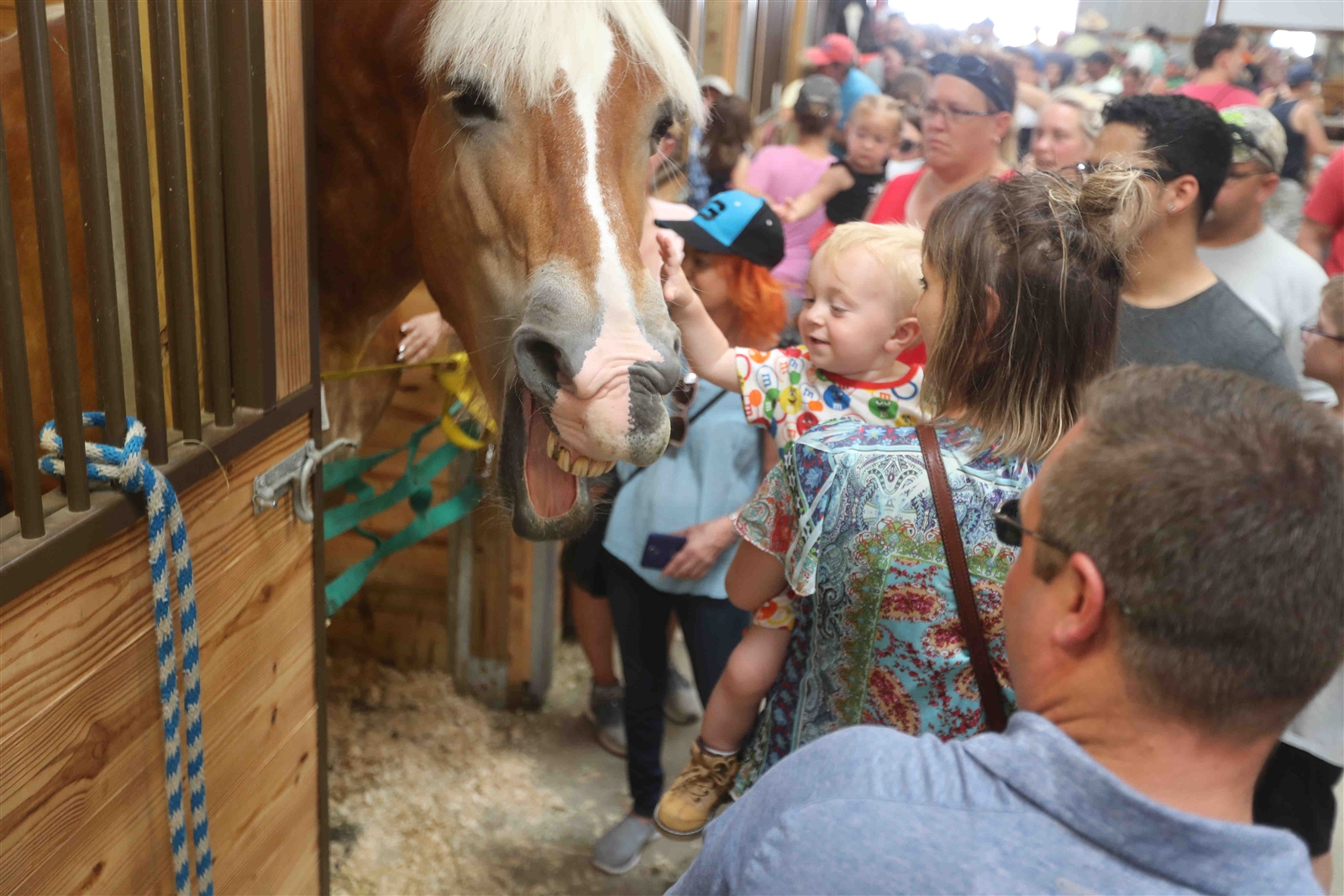 Sunday's good weather brought droves of pleasure-seekers to the Erie County Fair, which hosted a ceremony honoring veterans and various equestrian competitions.
