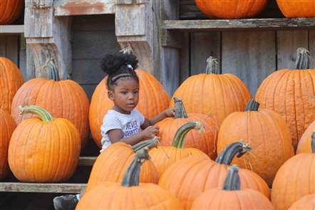 The Great Pumpkin Farm in Clarence opened  on Sunday, Sept. 16, 2018, with lots of pumpkins available, pie-eating contests, rides and more.