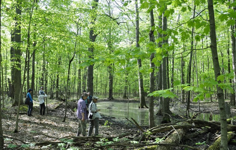 Conservationists explore a section of Assumption Cemetery on a recent visit. The WNY Land Conservancy last week bought the land from Catholic Cemeteries and plans to create a forest preserve there. (Photo by Ana Balzac courtesy of the conservancy)