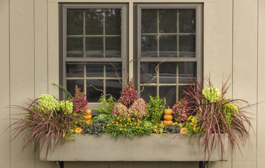 Sally Cunningham: Four lovely plants for now – The Buffalo News