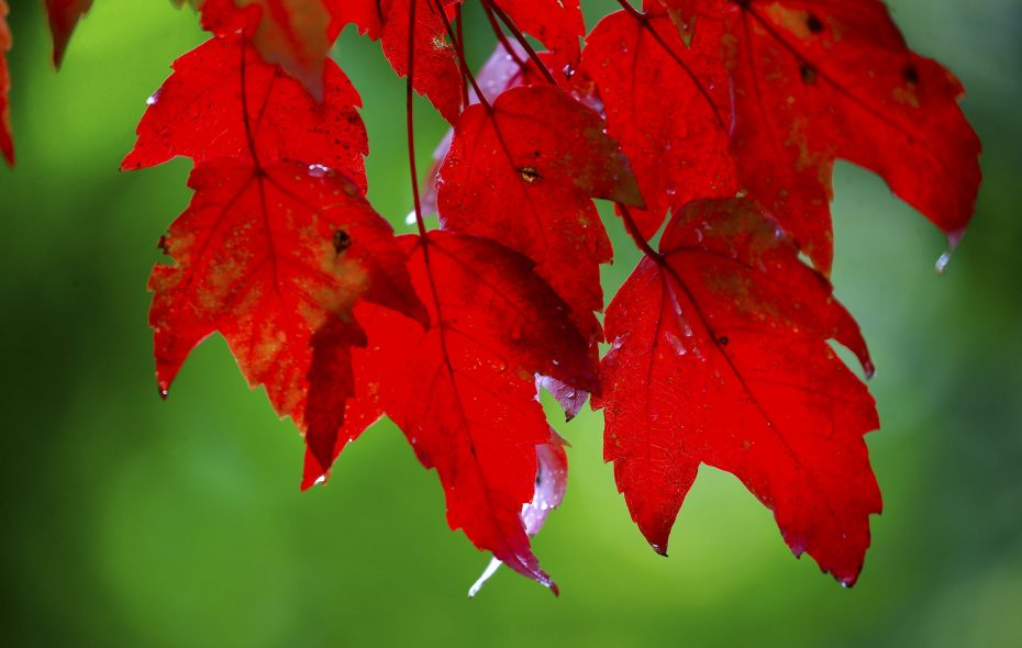 It's time to tackle fall tasks in the garden. (Robert Kirkham/News file photo)