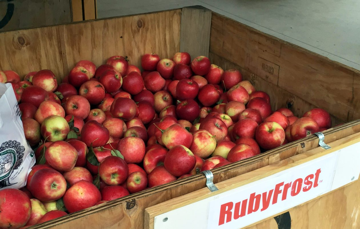 At Lynoaken Farms, we don't mess around with the usual apples, we go right for the Rubyfrost, SweeTango and Snapdragon special varieties.