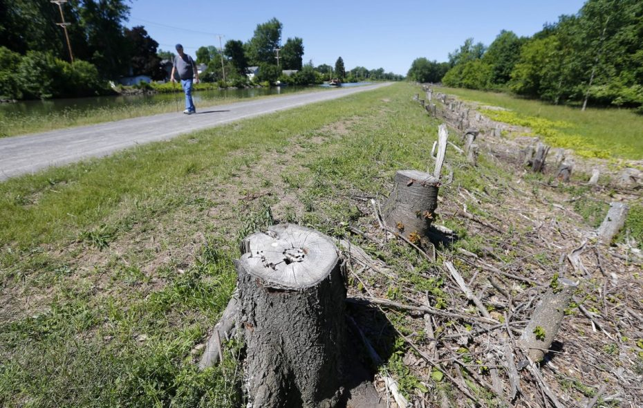 The stumps of trees along the Erie Canal in Albion in June 2018. (Mark Mulville/Buffalo News)