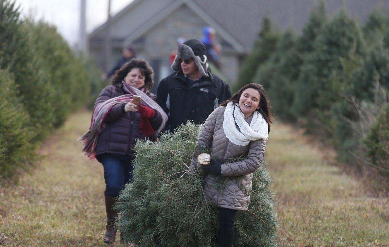 A few local Christmas tree farms allow you to bring dogs on a leash.(Sharon Cantillon/Buffalo News file photo)