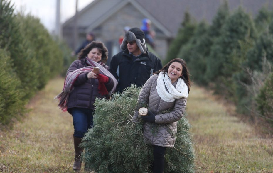 Cut Your Own Christmas Tree.Where To Cut Your Own Christmas Tree The Buffalo News