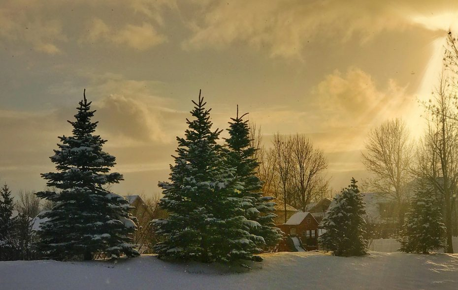 Snow coated the evergreens in this photo from earlier in the week in Amherst, but warming temperatures are upon us.  (Cathaleen Curtiss/Buffalo News)