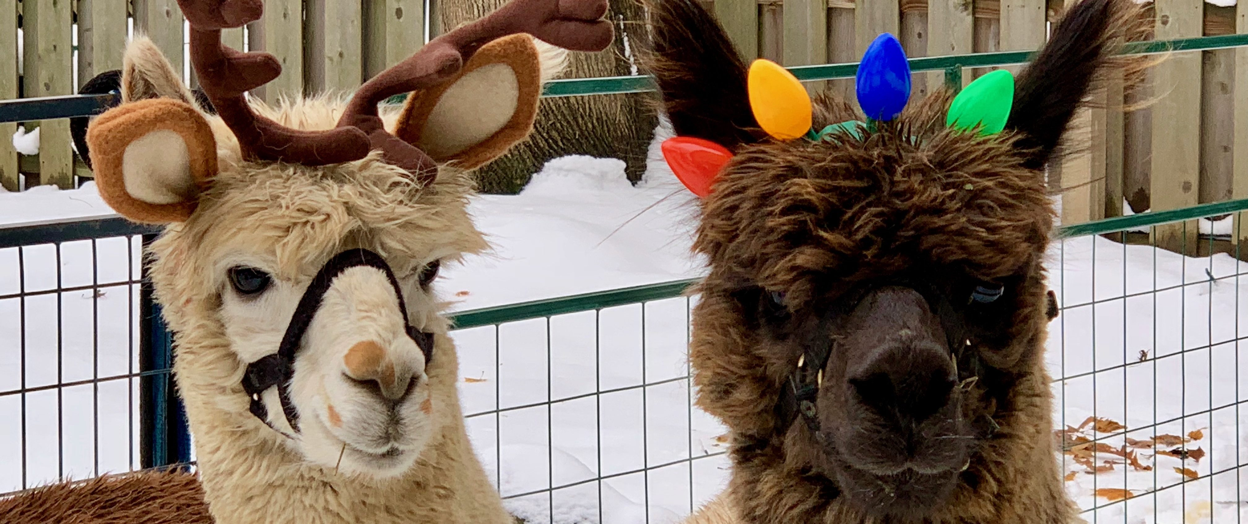 Elbert and Anakin show off their festive headbands at the Roycroft Campus Holiday Show.