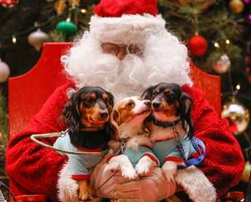 The Barkyard and the City of Buffalo Animal Shelter hosted its annual holiday fundraiser in the lobby of Ellicott Square, pet-friendly Santa as the main attraction for animal lovers to get photos of their furry friends with the big guy.